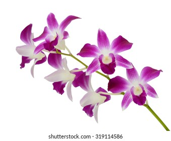 beautiful Purple Dendrobium orchids flowers isolated on white background