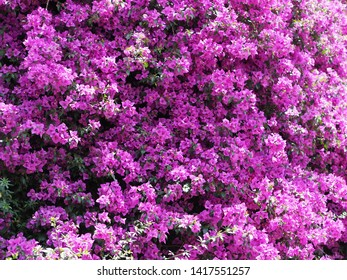 Beautiful purple flower for background.Beautiful nature in old town ,China
