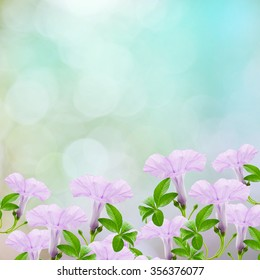 Beautiful Purple flower and leaves frame isolated on nature background