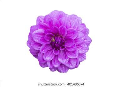 Beautiful Purple flower on white background