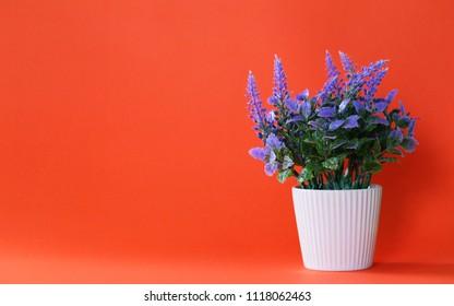 Beautiful purple flower potted closeup on orange texture blur background