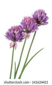 beautiful purple flowers isolated on white background