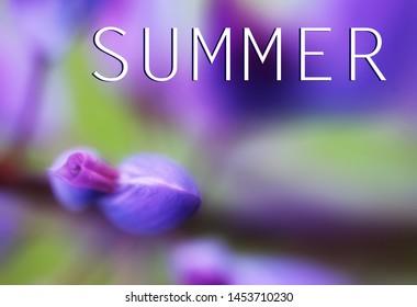 Beautiful purple flowers photographed close-up. Inscription on photo summer