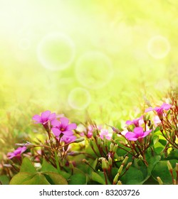 Beautiful purple flowers with a spring time bokeh and sun-flares