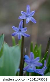 Beautiful purple flowers in wild nature