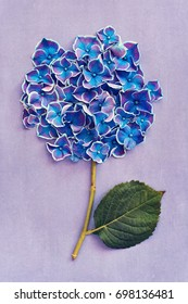 Beautiful purple hydrangea flowers close-up on a violet background .