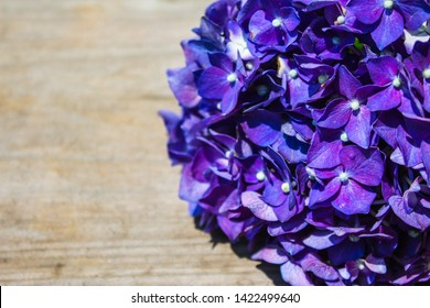 Beautiful purple hydrangea or hortensia flower close up. Rustic wood background