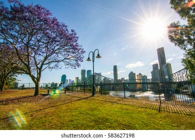 A beautiful purple jacaranda is blooming and Story bridge at Wilson's lookout New Farm in Brisbane Australia