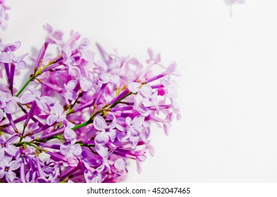 Beautiful purple lilac flowers, lilac flowers and empty space for your text