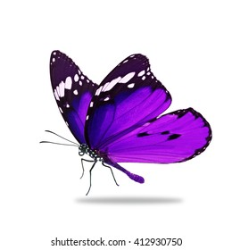 Beautiful purple monarch butterfly isolated on white background