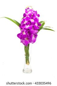 beautiful purple orchid flowers cluster isolated on white background
