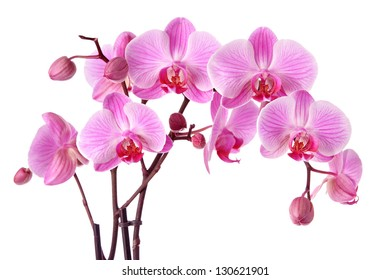 Beautiful purple orchid flowers isolated on a white background