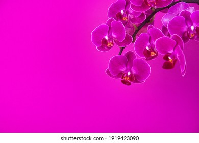 Beautiful purple orchid flowers over bright violet background with copy space. Greetings card. Happy womans day.