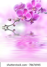 Beautiful purple orchid flowers reflected in the water, spa concept