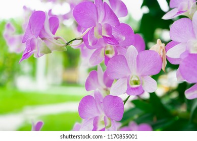Beautiful purple orchid. Suitable for use as a background.