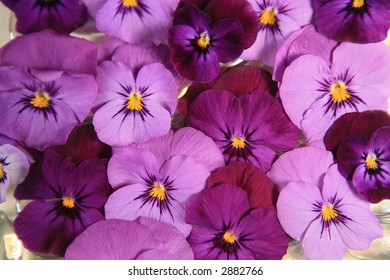 Purple pink pansy flower background stock photo royalty free beautiful purple and pink viola flower background mightylinksfo Choice Image