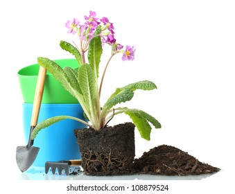 Beautiful purple primrose, soil and tools isolated on white