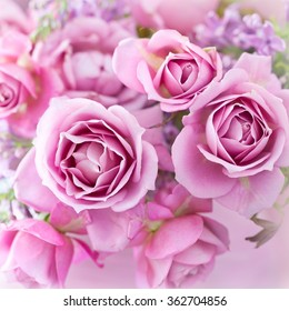 beautiful purple rose flower close-up.