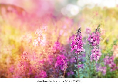 beautiful purple spring flower meadow on colorful soft light background