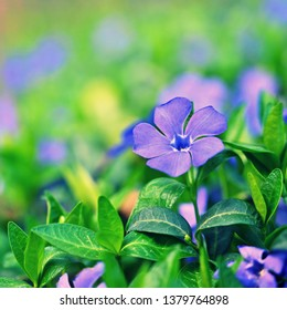 Beautiful purple spring flowers with colorful natural background. Springtime in the grass.