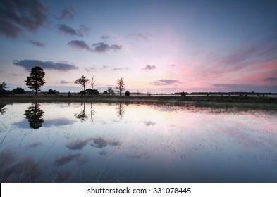 beautiful purple sunrise on lake, Kampina, Netherlands