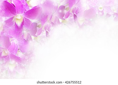 beautiful purple Thai orchid romance flower blossom in soft pastel color with bokeh light border and frame, concept for love valentine,wedding or any special events