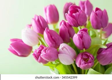 beautiful purple tulip flowers background