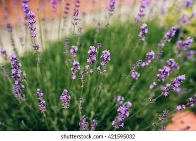 Beautiful purple wild flowers, soft focus