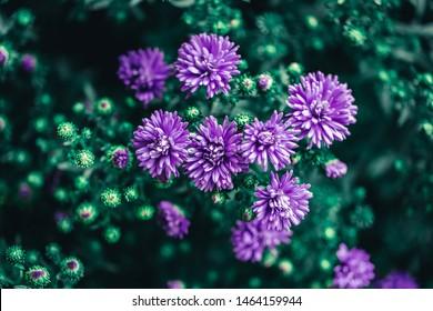 Beautiful purple wild meadow flower