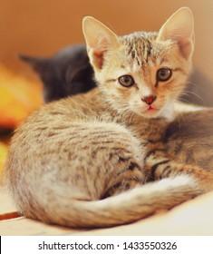 So Beautiful pussycat with cuteness