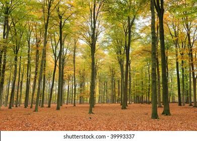 Beautiful quiet park in autumn.