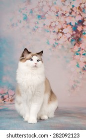 Beautiful rag doll cat posing at a romantic flower background