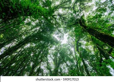 Beautiful rain forest at ang ka nature trail in doi inthanon national park, Thailand