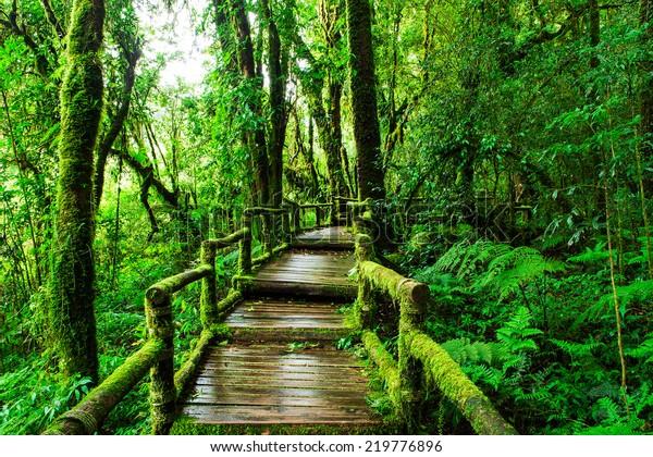 Beautiful Rain Forest Ang Ka Nature Nature Stock Image 219776896