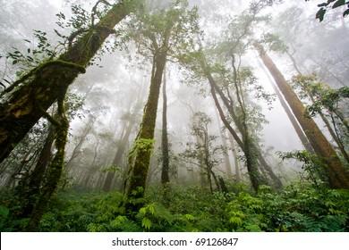 Beautiful Rain Forest (Doi Inthanon National Park), Thailand
