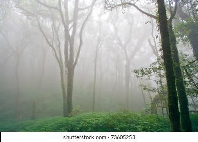 Beautiful Rain Forest with Fog (Doi Inthanon National Park), Thailand