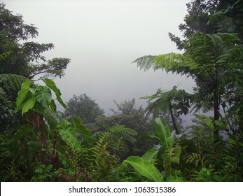 Beautiful rain forest landscape in a mysterious fog, Carbet's fall, Basse-Terre, Guadeloupe.