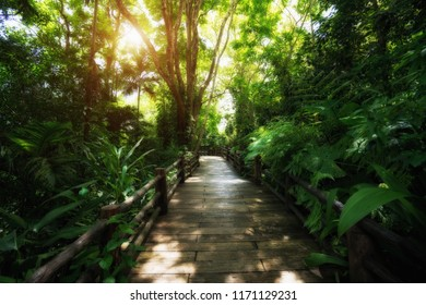 Beautiful rain forest at nature trails in Thailand is a very popular for photographer and tourists. Natural and Travel Concept.