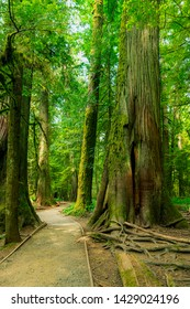 Beautiful Rainforest MacMillan Provincial Park - Beautiful walk pathway  along ancient old growth trees in MacMillan park known as Cathedral Grove 03,  Vancouver Island Canada.