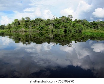 Beautiful rainforest reflecting in a lake in Ecuador