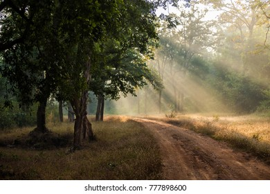 Beautiful rays of sunlight through dense forest in the foggy morning at Palamau Tiger Reserve.