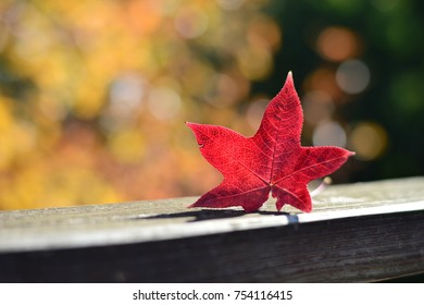 Beautiful red autumn leaf with yellow background, Osaka, Japan