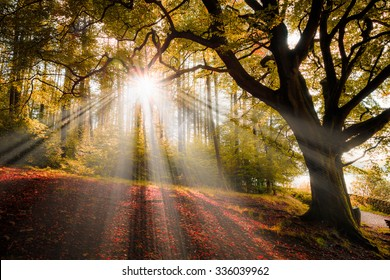 Beautiful Red Autumn leaves on the ground, Sunlight breaking through a gap in the trees in a wooded area/woods/forest