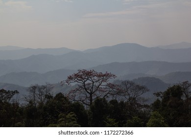 Beautiful red blossomed tree emerging from the jungle in the hills of People's Republic of Laos
