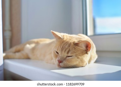 Beautiful red cat asleep on the windowsill