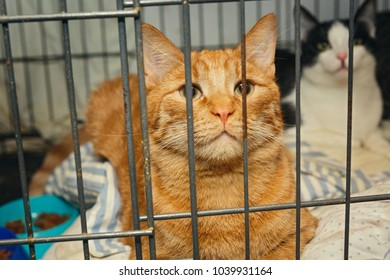 Beautiful red cat in a cage shelter for homeless animals