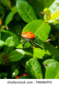 Beautiful red color bug