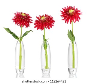 Beautiful red dahlias in vases isolated on white