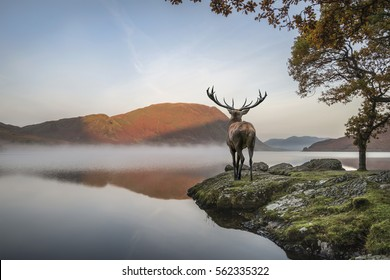 Beautiful red deer stag looks out across lake towards mountain landscape in Autumn scene