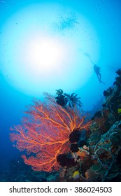 Beautiful red fan coral, with the silhouette of a diver behind. Healthy reef of Nusa Penida, Indonesia.